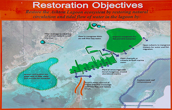 Arrow shows where openings will be made to increase natural circulation and tidal flow into the Lagoon.